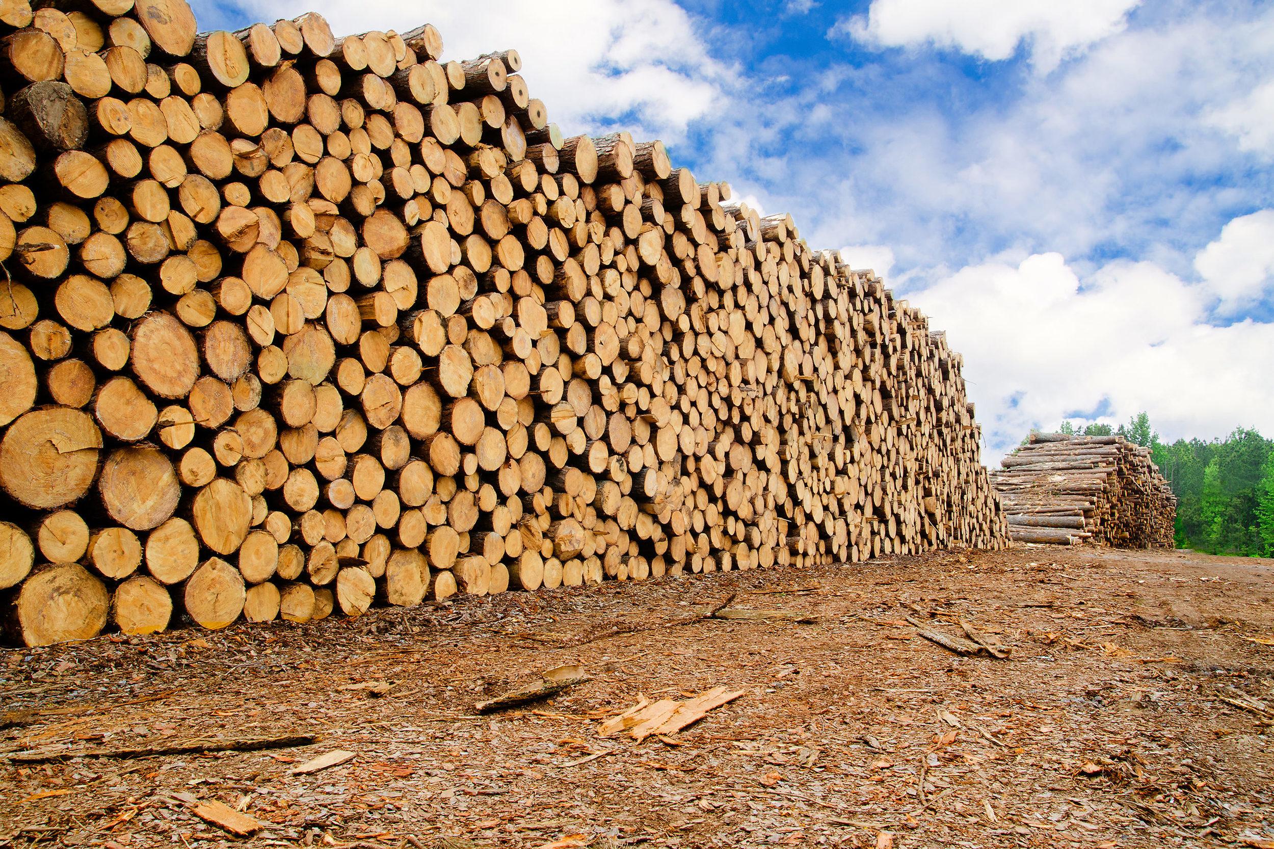 lumber-logging-new72