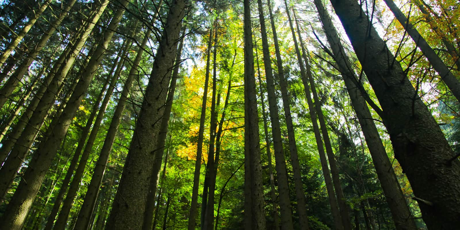 smart-timber-harvesting-on-a-property-requires-planning